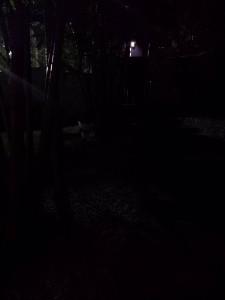 Galaxy S4 - Nuit - Jardin
